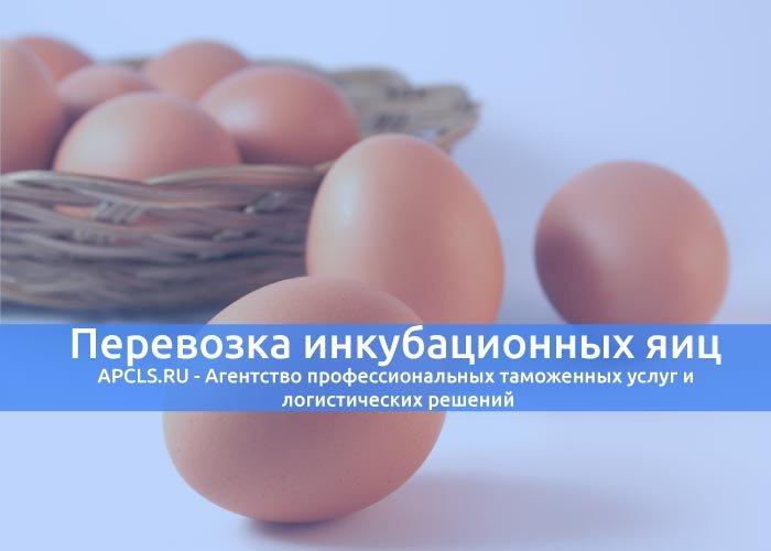 Перевозка инкубационных яиц