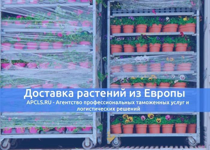 Доставка растений из Европы